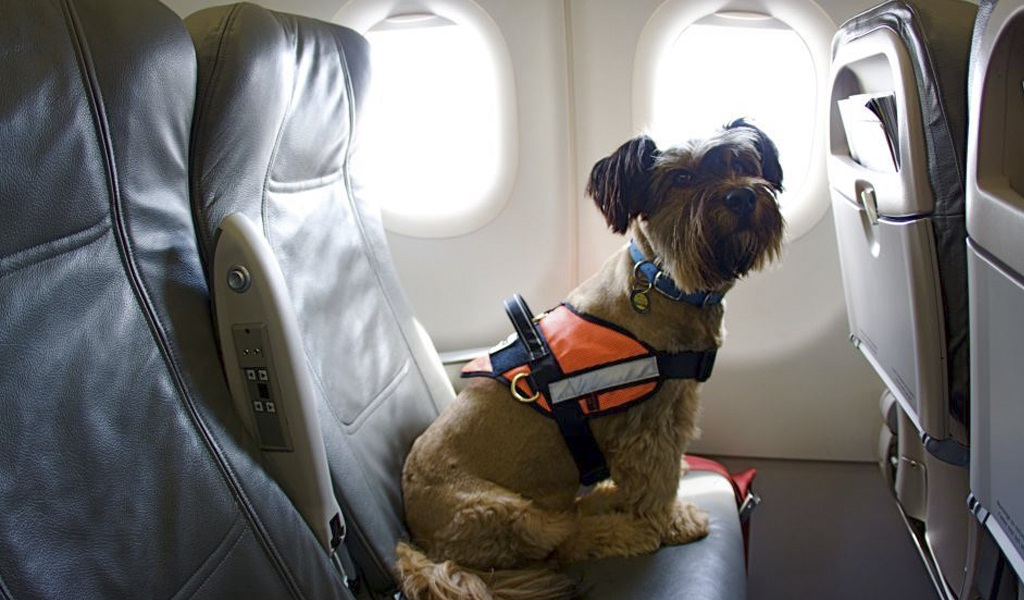 Times: flight of Norwegian Air from London to Austin was delayed because of dogs' behavior